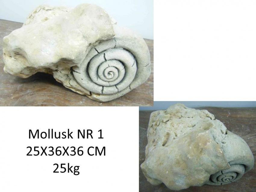 buddha4allnl  versteende schelpen (fossielen) # Wasbak Schelp_094824